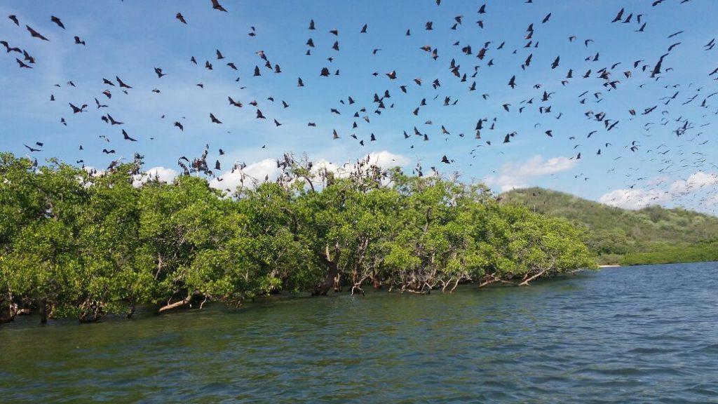 Pulau Kalong Labuhan Bajo