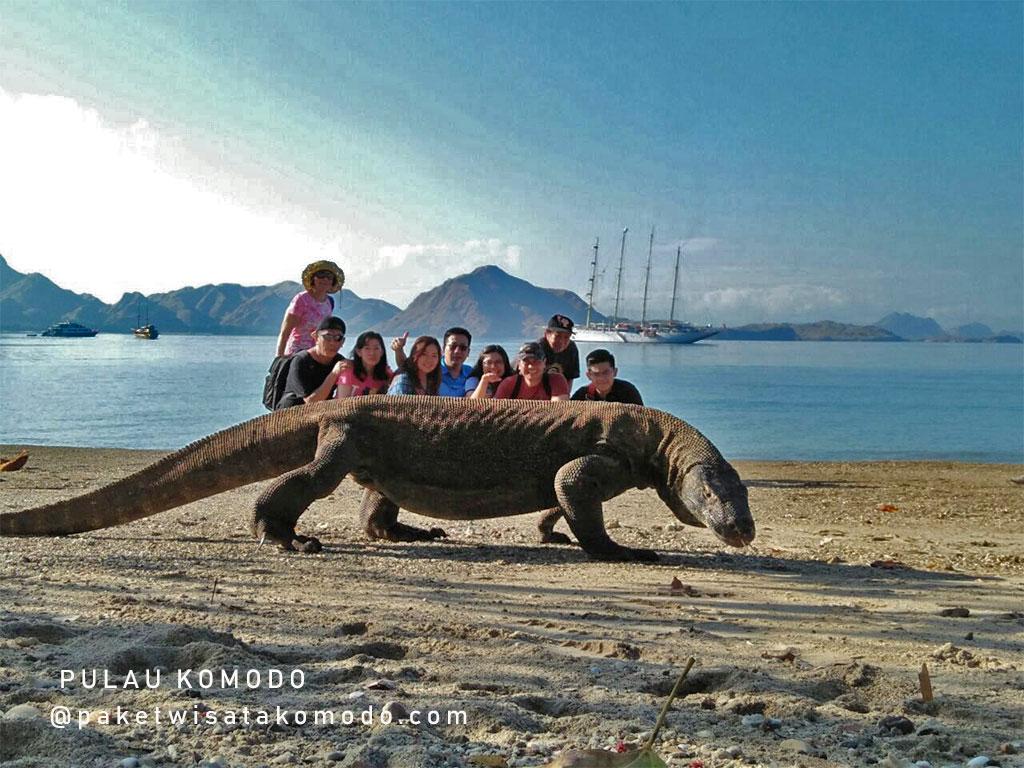 Reptil Komodo di pantai