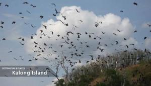 Sailing-Trips-Kalong-Island
